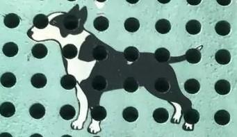 Bullpadel: marka Bull Terrier