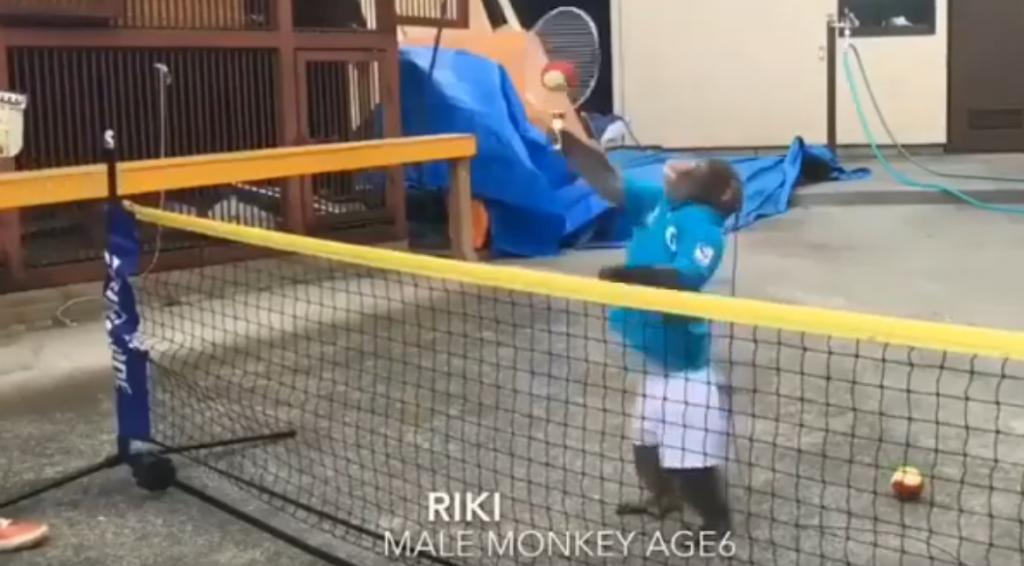Der Affe Riki: Tennis und Netzstar!