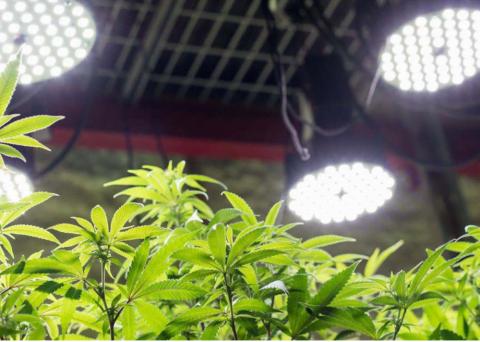 Marijuana i en padelklubb