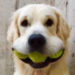 confinement tennis padel covid19 ouverture clubs chien balles