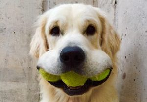 tennis confinement padel covid19 opening clubs dog balls